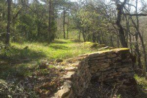 Atelier In situ - Forêt de Sivergues